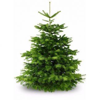 Wo Günstig Weihnachtsbaum Kaufen.Weihnachtsbaum Online Kaufen Weihnachtsbaum Online Versand